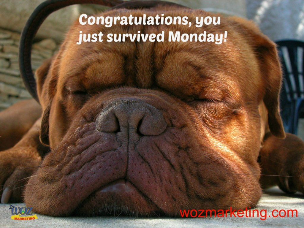 You Survived Monday